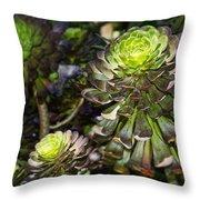 Aeonium Glow Throw Pillow