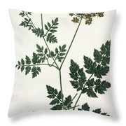 Aethusa Cynapium From Phytographie Throw Pillow