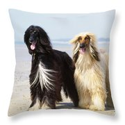 Afghan Hound Dogs Throw Pillow