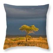 African Acacia Sunrise Throw Pillow