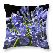 African Blue Lily Throw Pillow