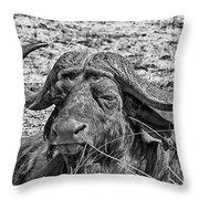 African Buffalo V4 Throw Pillow
