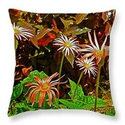 African Daisies In Aswan Botanical Garden On Plantation Island In Aswan-egypt Throw Pillow