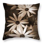 African Daisy Named African Sun Throw Pillow
