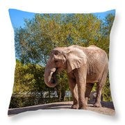 African Elephant 2 Throw Pillow