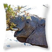 African Elephant Browsing In Kruger National Park-south Africa Throw Pillow