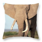 African Elephant Bull Amboseli Throw Pillow