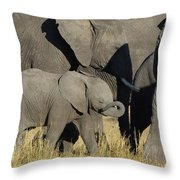 African Elephant Calf With The Herd Throw Pillow