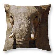 African Elephant Close Up Amboseli Throw Pillow