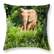 African Elephant Coming Through Trees Throw Pillow