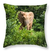 African Elephant Eating In The Shrubs Throw Pillow