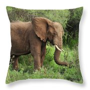 African Elephant Grazing Serengeti Throw Pillow