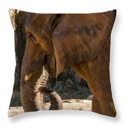 African Elephant Profile Throw Pillow