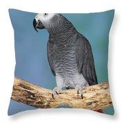 African Gray Parrot Throw Pillow