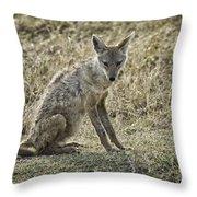 African Jackal Throw Pillow