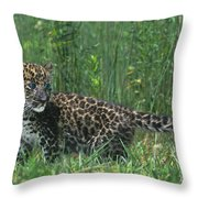 African Leopard Cub In Tall Grass Endangered Species Throw Pillow
