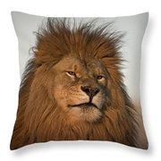 African Lion-animals-image Throw Pillow
