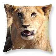 African Lion Cub Resting Throw Pillow