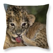 African Lion Cub Wildlife Rescue Throw Pillow