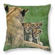 African Lion Cubs Study The Photographer Tanzania Throw Pillow