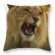 African Lion Male Growling Throw Pillow by San Diego Zoo