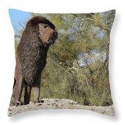 African Lion Sculpture Detail Throw Pillow