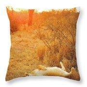 African Mammals Throw Pillow