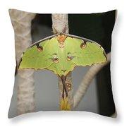 African Moon Moth Throw Pillow