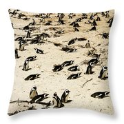 African Penguins Throw Pillow by Oliver Johnston