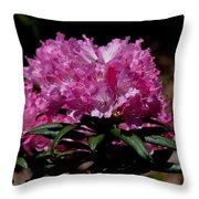 African Pink Throw Pillow