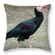 Southern Bald Ibis Strutting Around Throw Pillow