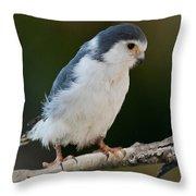 African Pygmy Falcon Throw Pillow