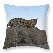 African Safari Leopard 1 Throw Pillow