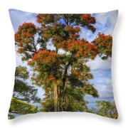 African Tulip At Liliuokalani Park Throw Pillow
