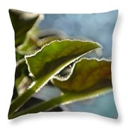 African Violet Leaves With Bokeh   Throw Pillow