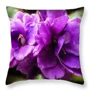 African Violet Throw Pillow