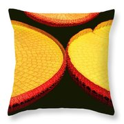 African Water Lilly Platters Throw Pillow