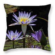 African Waterlily Dazzle -- Plus Dragonfly Throw Pillow