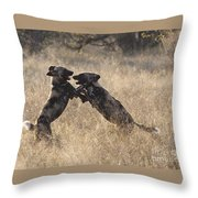 African Wild Dogs Playing Lycaon Pictus Throw Pillow