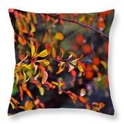 After The Autumn Rain 1 Throw Pillow