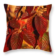 After The Frost Throw Pillow
