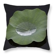 After The Rain- Gungarre Billabong V2 Throw Pillow