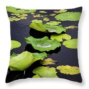 After The Rain- Gungarre Billabong V3 Throw Pillow