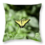Afternoon Butterfly Throw Pillow