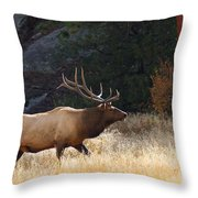 Afternoon Patrol Throw Pillow