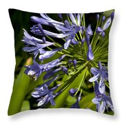 Agapanthus Flower And Bee Throw Pillow
