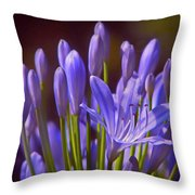 Agapanthus - Lily Of The Nile - African Lily Throw Pillow