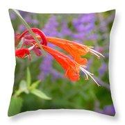 Agastache Coronado Throw Pillow
