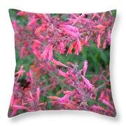 Agastache Rupestris 1 Throw Pillow