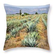 Agave Cactus Field In Mexico Throw Pillow